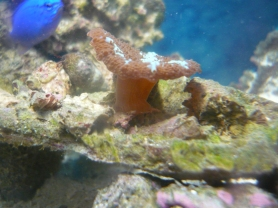 Underwater mushrooms.
